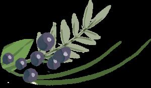 fig vines